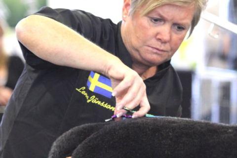 Certifiering för hundfrisörer