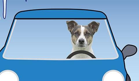 Hund i kall bil
