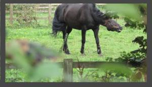 Pontcanna Horse
