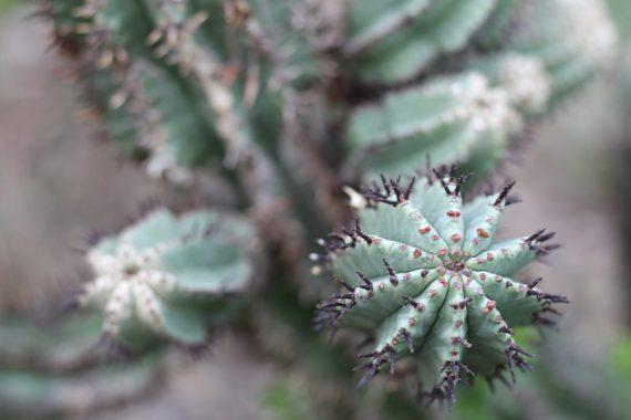 Cactus at National Botanic Garden