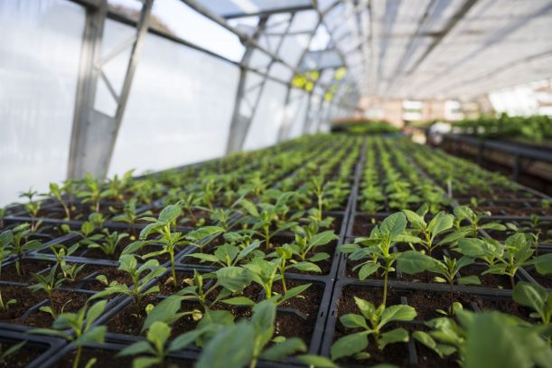 Growing in Cardiff Salad Garden