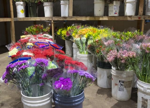 carlos.floral.4748