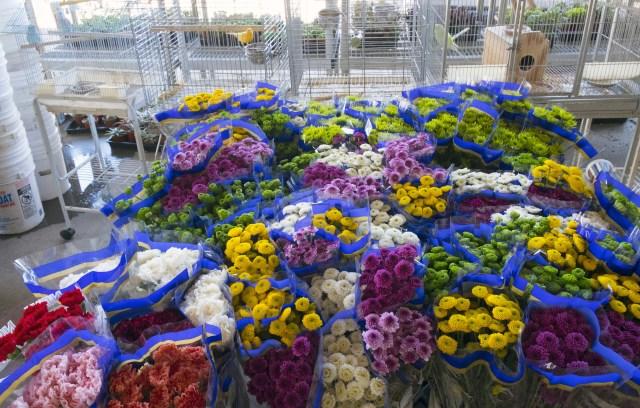 carlos.floral.4751