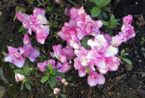 japanese.garden.3694