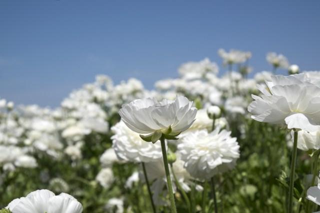 flower.fields.5864