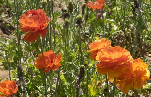 flower.fields.5928