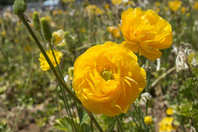 flower.fields.5932