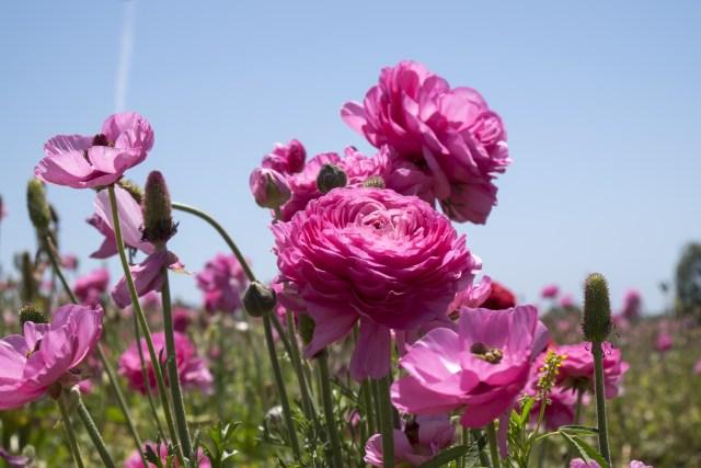 flower.fields.5967