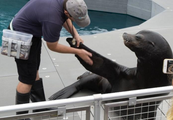sea-lion-show-aq-ny2528