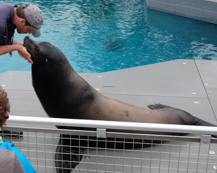 sea-lion-show-aq-ny2537-copy