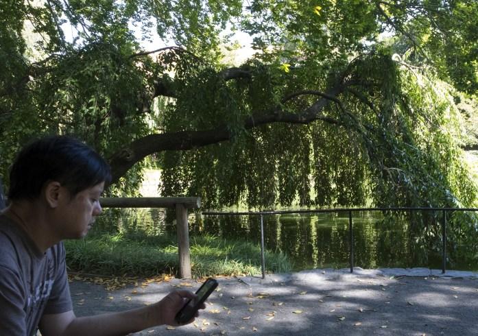 brooklyn-botanical-gardens2856