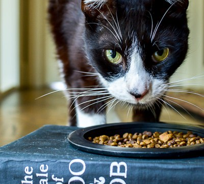 Smarty Cat Food Bowl Made From An Old Book
