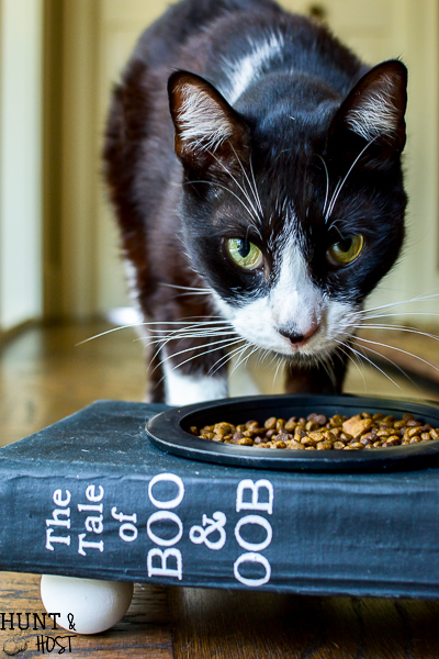 This is the cutest cat food bowl made from an old book, full tutorial for a smarty cat food dish.