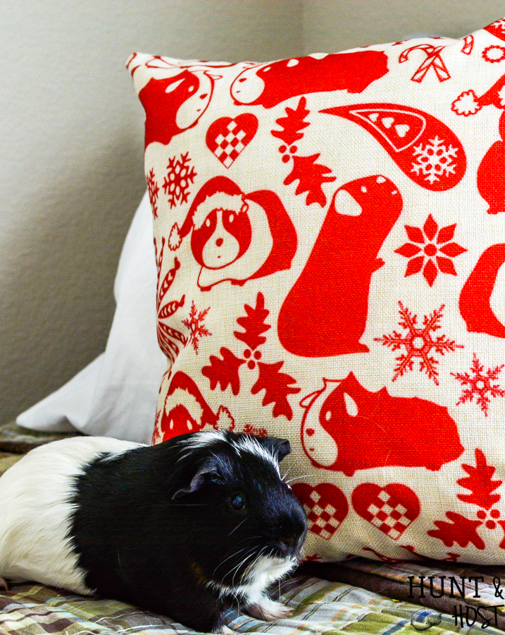 This adorable guinea pig pillow for Christmas is a rare find. Perfect for the animal lover on your list or to add some piggie love to your holiday decor. #guineapig #pillow #pillowcover #farmpillow #christmaspillow #christamsdecor