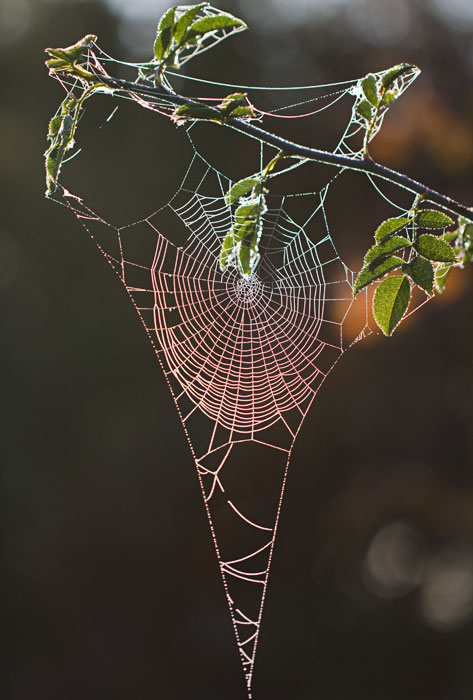 jewelled spiders web