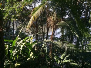 Jungle, view, Paraty