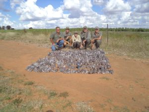 Bird Hunting in South Africa 2