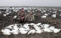 February is as good of a time as any to hunt snow geese during the conservation order.