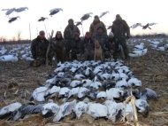 A strong migration of snow geese on this day allowed this group of 8 hunters to harvest 90 birds.