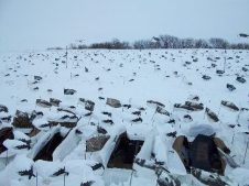 Some days it's the little things that make our snow goose hunts successful. When it snows we get out the snow covers so the blinds disappear.