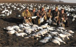 Snow geese are attracted to our large decoys spreads. Here is another big day in the fallow field.