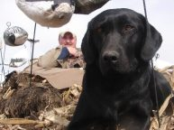 Savannah waiting for the next flock of migrating snow geese so she can go to work. .
