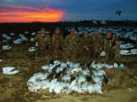 Spring Snow Goose Hunts 2014_013