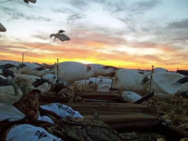 Spring Snow Goose Hunts 2014_015