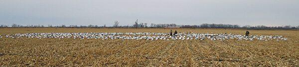 Spring Snow Goose Hunts 2014_020