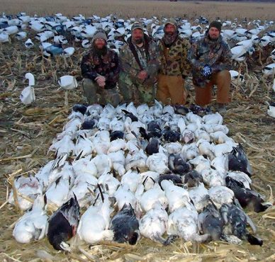 One of the best days during the 2014 spring snow goose season. This was in Missouri.