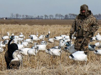 Spring Snow Goose Hunts 2014_042
