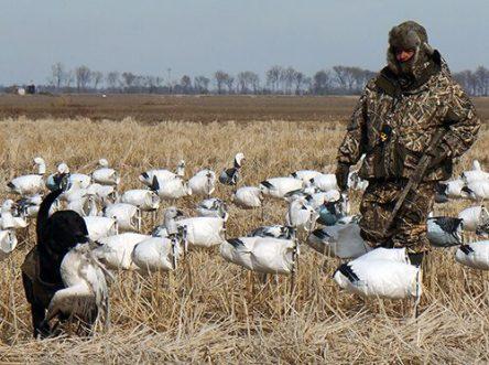Spring Snow Goose Hunts 2014_042
