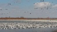 Refuge in the area we run our snow goose hunts.
