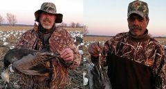 Here is two of the four bands snow this year. Both were shot out of the same flock and only 7 numbers apart. Both were juvy blue geese. Guide Tryg Koch must have a knack for this... several years back his hunters shot 2 snows out of a flock in South Dakota that had consecutive band numbers.