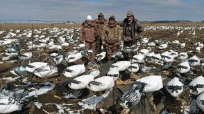 Big spread, good friends, good times during this snow goose hunt.