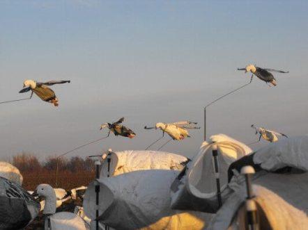 Deadly Decoy™ Flyer Flock