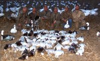 Late February snow goose hunt... 62 snow geese.