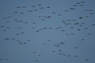 Birds Over Spread 11