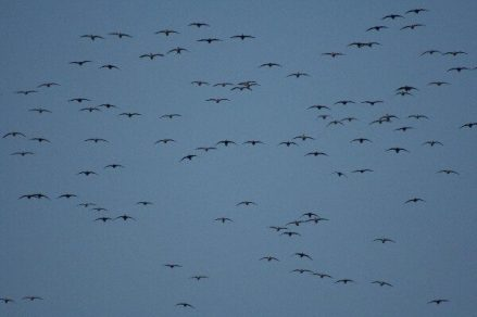 Birds Over Spread 11