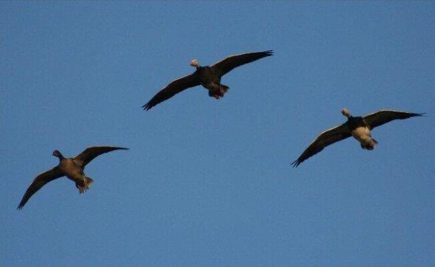 Birds Over Spread 1