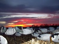 Scenic sunset over the Deadly Decoys™ snow goose decoys.