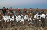 Above average February snow goose hunt.