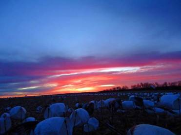 spring-snow-goose-hunt-2013-111