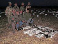 Spring Snow goose season 2012