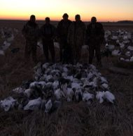 Arkansas 2015 Snow Goose Hunt