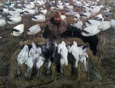 Arkansas Snow Goose Guide
