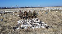 CL2_3_2 Arkansas 2015 Snow Goose Hunt