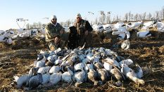 huntupnorth.com arkansas snow goose hunts