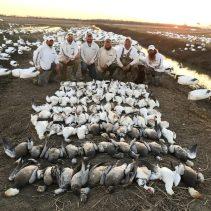 Spring Snow Goose Hunting Www.huntupnorth.com 205