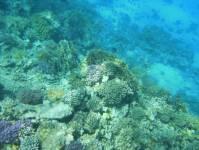 Tauchen und Schnorcheln bei einem Tauchkurs vor Hurghada